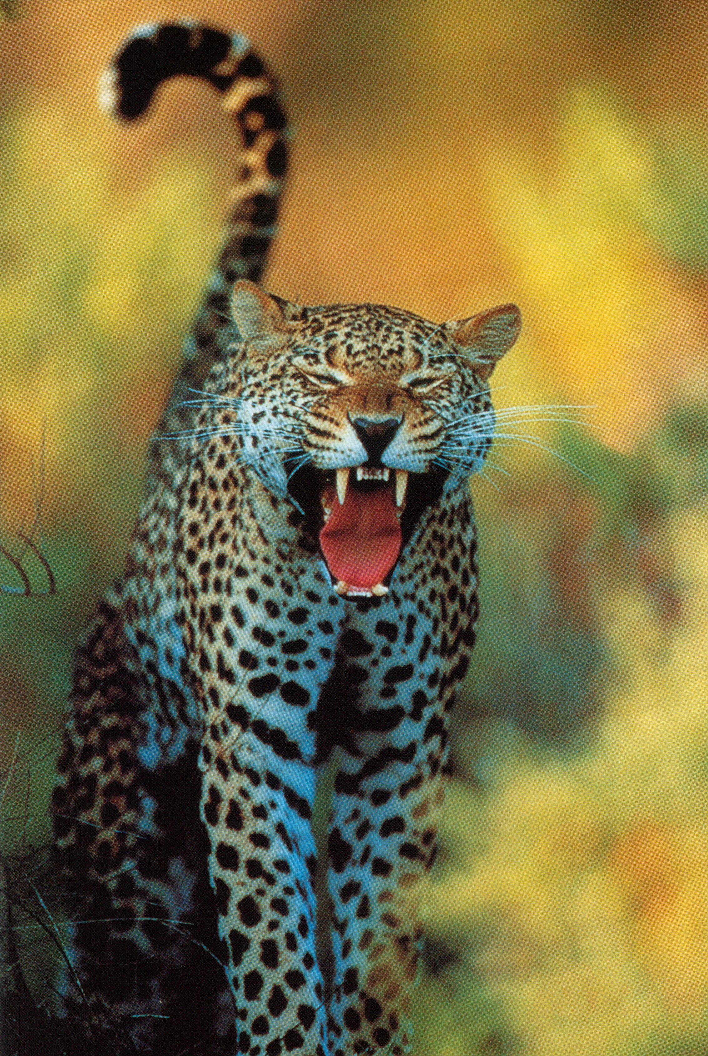 с тиграми и львами