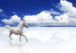 Скачать Обои С Паролем Принт Лошадей
